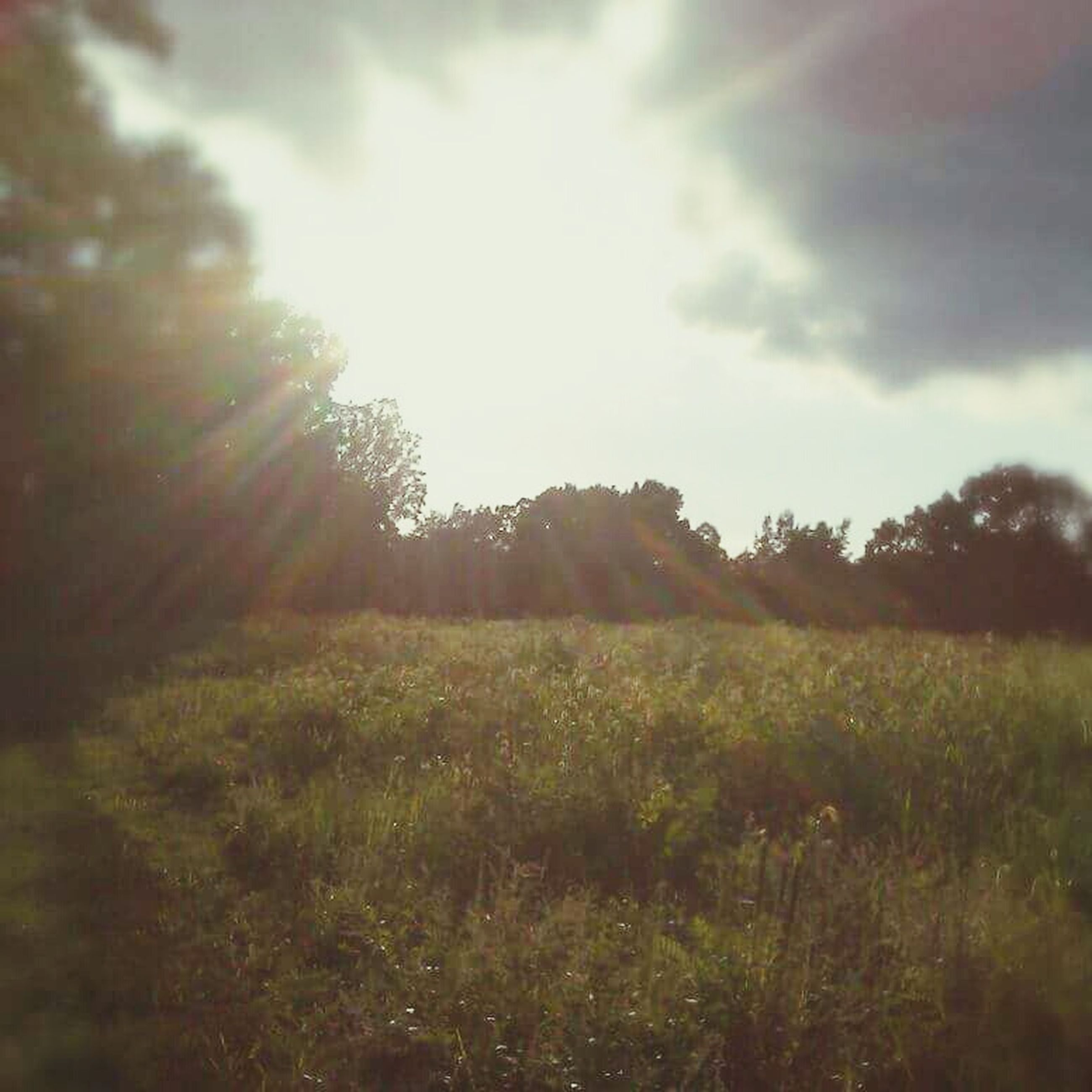 tree, tranquility, sky, growth, tranquil scene, sun, field, sunbeam, grass, nature, beauty in nature, sunlight, landscape, scenics, lens flare, cloud - sky, plant, grassy, non-urban scene, day