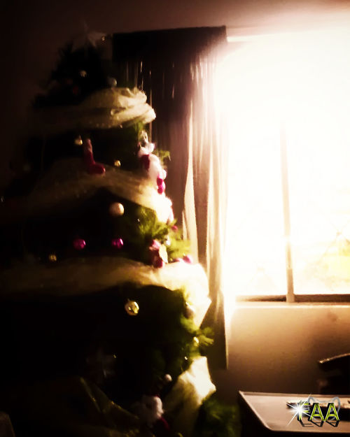 Celebration Christmas Christmas Decoration Christmas Tree Close-up Illuminated Indoors  Night No People Tree