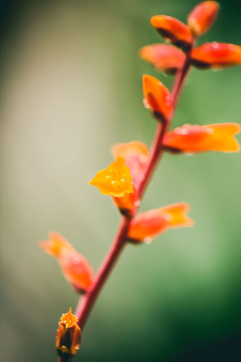 The First to Bloom Beauty In Nature Beginnings Blossom Botany Bud Close-up Flower Flower Head Focus On Foreground Fragility Freshness Growing Growth In Bloom Nature New Life Orange Color Outdoors Petal Plant Selective Focus Stem Nature Photography Maximum Closeness