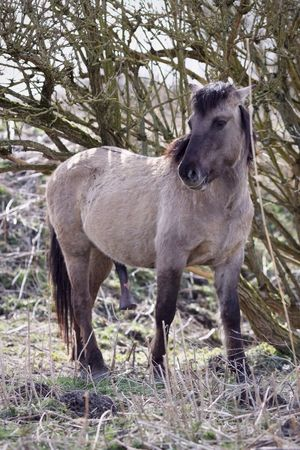 Happy To See Me? Spring Is In The Air Konik Stalion Animal Themes One Animal Mammal Standing Livestock Domestic Animals Tree No People Outdoors Full Length Nature Day Grass