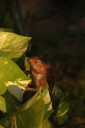 Close-up of a lizard on leaves