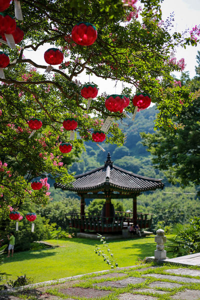 Korea Architecture Beauty In Nature Branch Buddhist Temple Building Exterior Built Structure Day Green Color Growth Hwasun Lotus Lantern Manyeon Sa Nature No People Outdoors Red Temple Tree