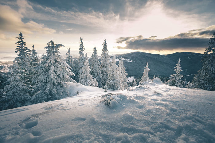 Beauty In Nature Cloud - Sky Cold Temperature Covering Environment Landscape Mountain Nature No People Non-urban Scene Outdoors Plant Scenics - Nature Sky Snow Snowcapped Mountain Tranquil Scene Tranquility Tree White Color Winter