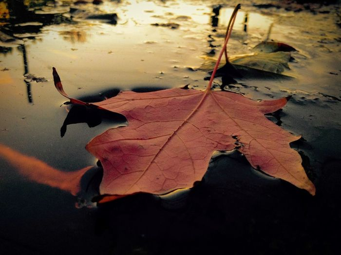 Photography Leaf 🍂 Leaf Leaves🌿 Leaves Nature Maple Leaf Reflection