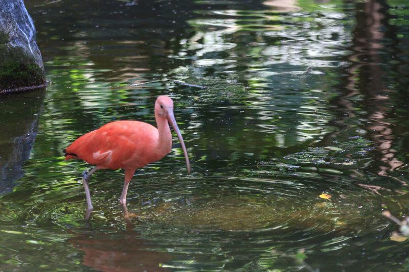 Wasser Vogel Water Bird Animal Wildlife Animal Themes Animals In The Wild Animal Reflection Lake One Animal Nature