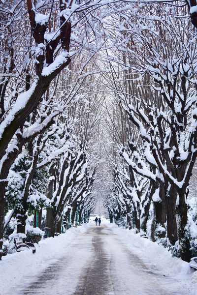 Alley Beauty In Nature Cold Days Cold Temperature Cold Winter ❄⛄ Couple Couple Walking Love Nature Outdoors Park Road Snow Snowy Strolling Trees Winter Winter Trees Winter Wonderland Wintertime