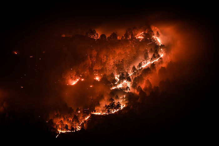 Forest burning in night