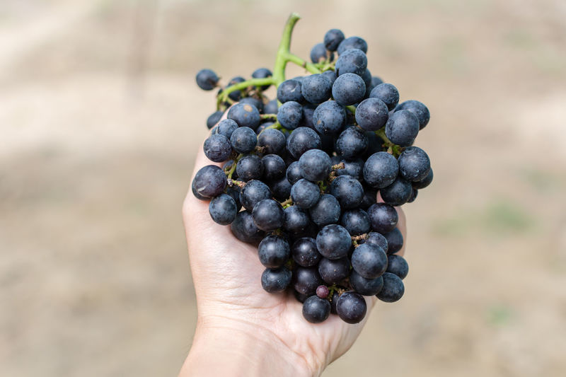 Cropped Image Of Hand Holding Red Grapes