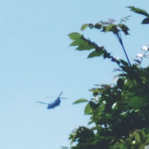 Chinook Helicopter Maximum Zoom
