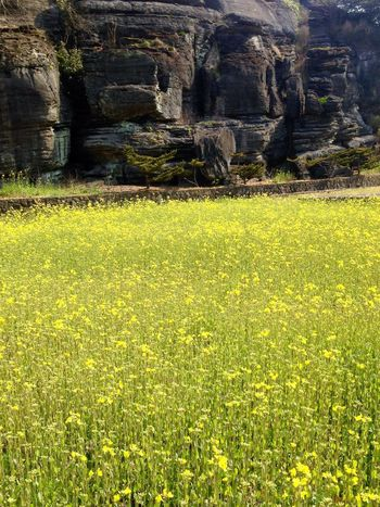 Beauty In Nature Limestone Mountains Nature Beauty In Nature Scenics Yellow Growth No People Outdoors Tranquility Tranquil Scene Grass Day Tree Close-up (null)Saikai City Japan