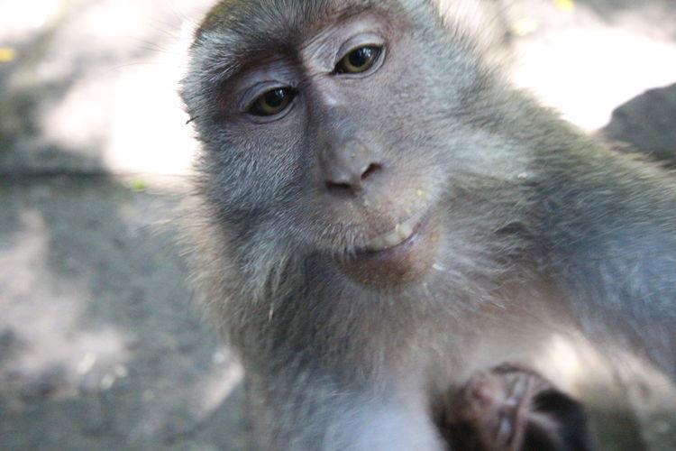 Animal Wildlife Animal Monkey Animals In The Wild Mammal Portrait Outdoors Looking At Camera Close-up Day Nature No People Animal Themes MonkeyForest Ubud Bali UluwatuTempleBali Mother And Child M