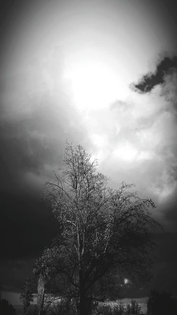 Stormy Sky Storm Coming Black And White Photography Black And White Tree And Sky Tree_collection  Weather Photography Gloomy Day Gloomy Weather Ominous Beauty Cold Outside Approaching Storm Clouds