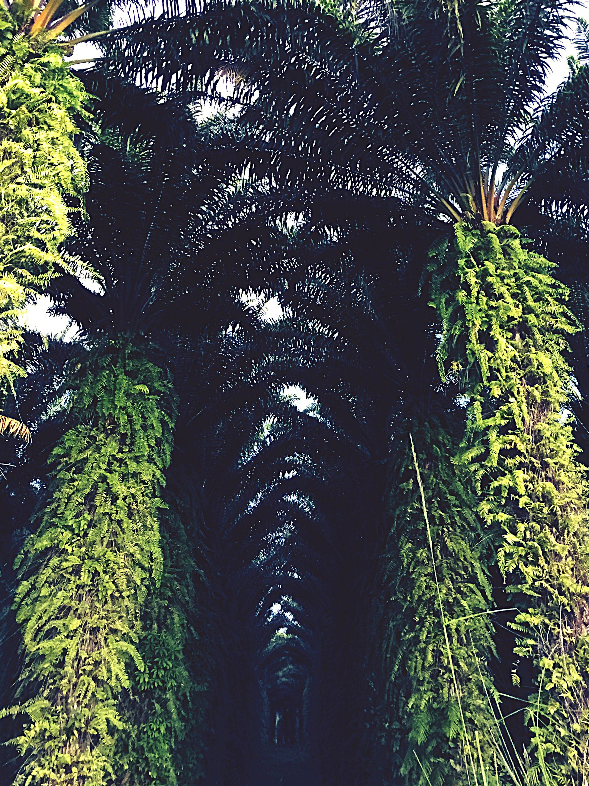 tree, growth, green color, plant, branch, nature, leaf, tranquility, sunlight, tree trunk, low angle view, day, lush foliage, outdoors, no people, green, palm tree, shadow, beauty in nature, sky