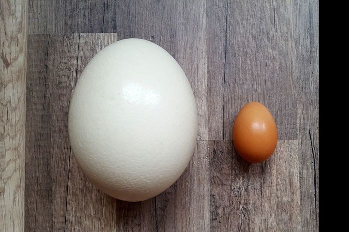 Egg Hen Chicken Chicken Egg Ostrich Egg Ostrich Small BIG Motherofeggs Photography Indoors  Floor Size Food Life Life Before Birth White Orange Brown