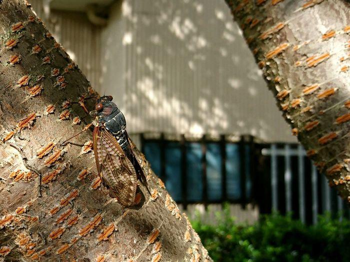Close-up of cicada on tree trunk