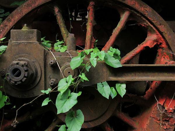 Wheel of a steam train. Private museum in Hermeskeil / Germany. Locked Wheel Abandoned Close-up Day Green Color Growth Leaf Lost Places Mechanism Metal Metallic Museum Nature No People Nut Obsolete Technology Outdoors Plant Railway Rusty Spokes Steam Locomotive Steam Train Steel