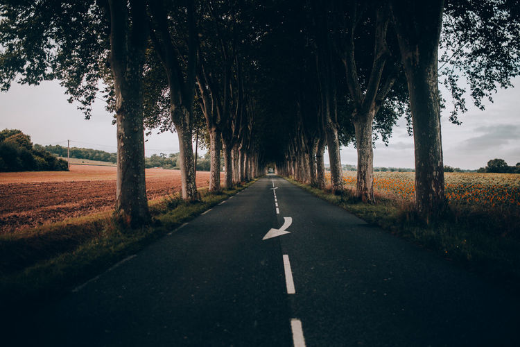 Asphalt Beauty In Nature Day Diminishing Perspective Grass Landscape Nature No People Outdoors Road Road Marking Scenics Sky The Way Forward Transportation Tree