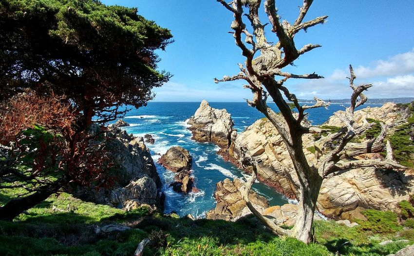 A twisted, old tree among the ancient coast and newly greening land. Blue Green Water California Coast Dead Twisted Tree On Coastline No People Point Lobos State Park CA Refreshing Rock Formation Rocky Coastline Tranquil Scene The Secret Spaces Live For The Story My Best Travel Photo