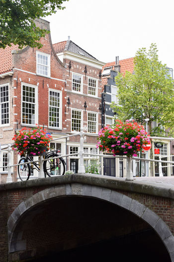Netherlands Summertime Travel Architecture Bicycle Bike Building Exterior Built Structure Canal City Cycling Day Europe Flower Flowering Plant Leisure Activity Nature No People Outdoors Plant Summer Sustainable Transportation Tree Water