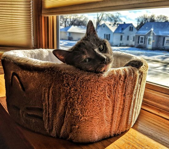 Cat Cute Lounging Cozy Pet Window Close-up Golden Color At Home Sleepy Domestic Cat Whisker Kitten Tabby Feline Home