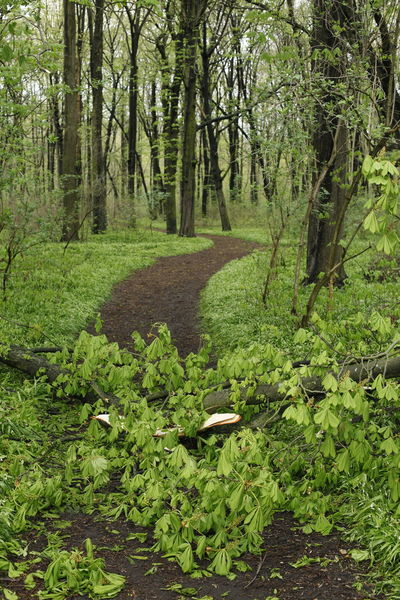 Plänterwald Blocked Path Day Forest Freshness Green Color Growth Nature No People Outdoors Path Plant Plänterwald Berlin Tree