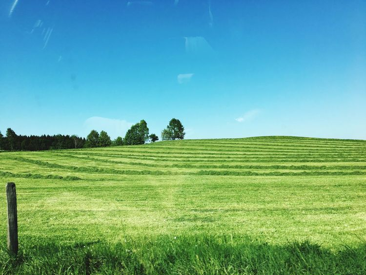 Grüner Wiesen gemäht, Heu beim Trocknen Plant Landscape Field Growth Land Sky Tranquility Beauty In Nature Green Color Agriculture Nature Farm Scenics - Nature