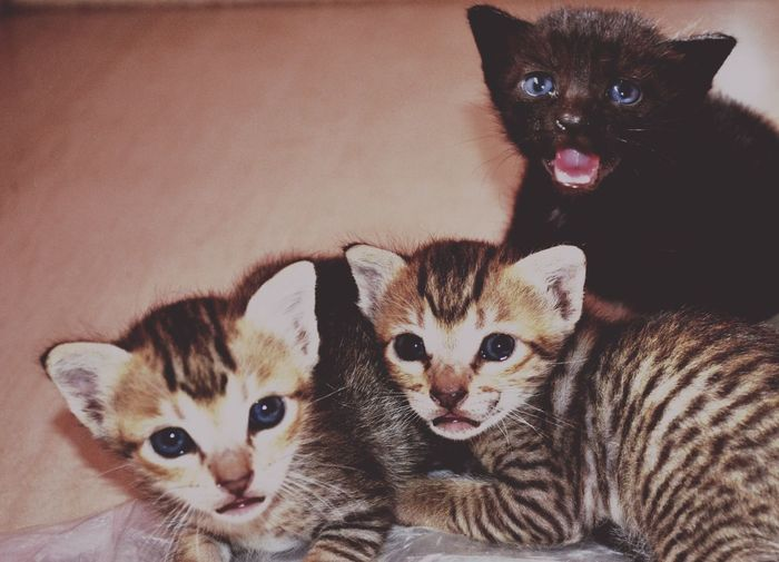 Close-Up Of Cute Kittens At Home
