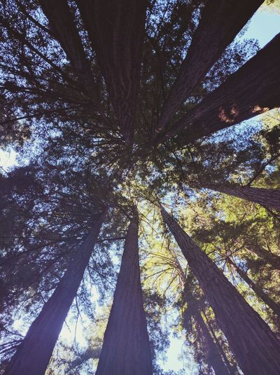 Low Angle View Tree No People Growth Sky Nature Outdoors Beauty In Nature Day Illuminated California