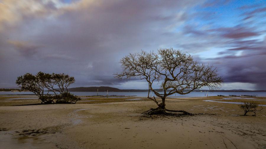 Bare tree on shore against sky