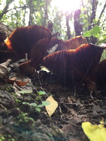 Nature Plant No People Land Tree Leaf Plant Part Day Growth Field Animal Vertebrate Close-up Selective Focus Beauty In Nature Wood Animal Themes Outdoors Forest One Animal Toadstool