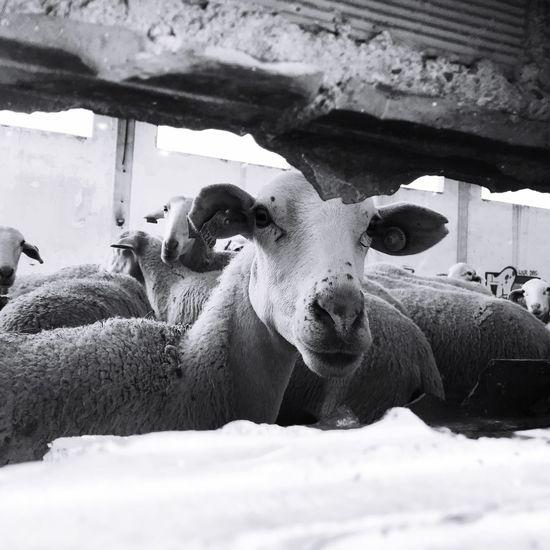 Tan acompañada y tan sola 😢 Vive Vegan Y Deja Vivir Go Vegan 269 Explotación Animal Looking At Camera