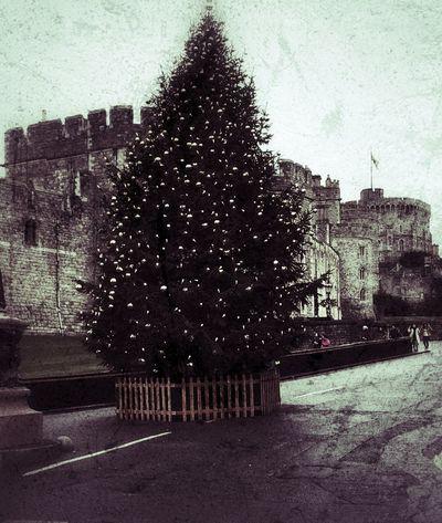 Windsor Castle Outdoors Tree Christmas Tree No People Castle Windsor Windsor Berkshire Windsor, UK Moodyphotography