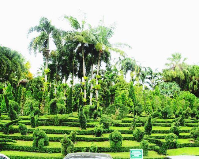 nong nooch tropical garden. Thailand. Green Color Garden Green Thailand Nong Nooch Tropical Bothanical Garden World Enjoying Life Beautiful Beauty In Nature Colour Of Life Color Palette