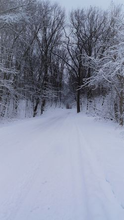 Snowy winter road and trees Bare Tree Beauty In Nature Cold Temperature Day Landscape Nature No People Outdoors Road Scenics Snow The Way Forward Tranquility White Color Winter