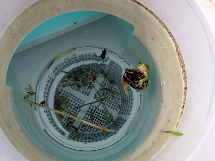 High angle view of frog in water filled bucket