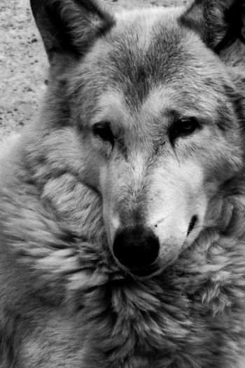 Animal Head  Animal Themes Close-up Day Dog Domestic Animals Mammal No People One Animal Outdoors Pets Portrait