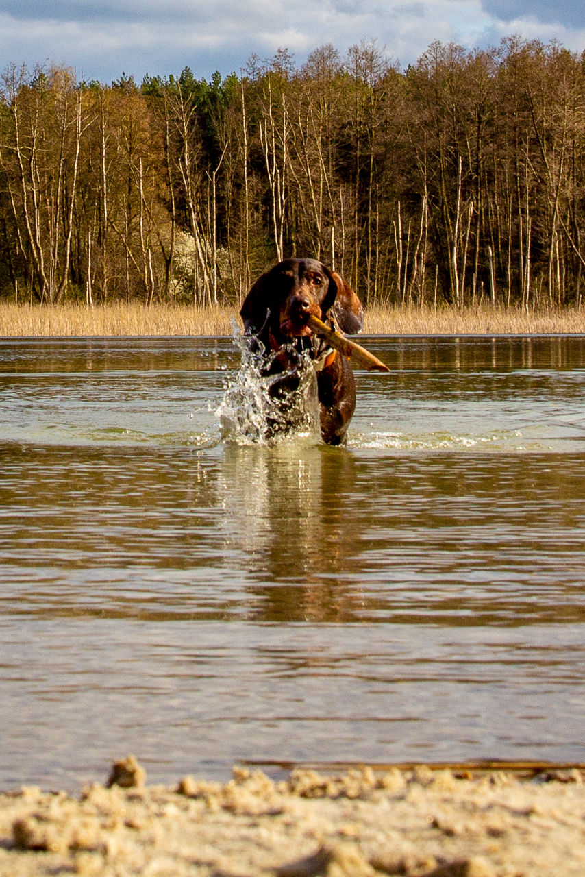 DOG IN THE LAKE