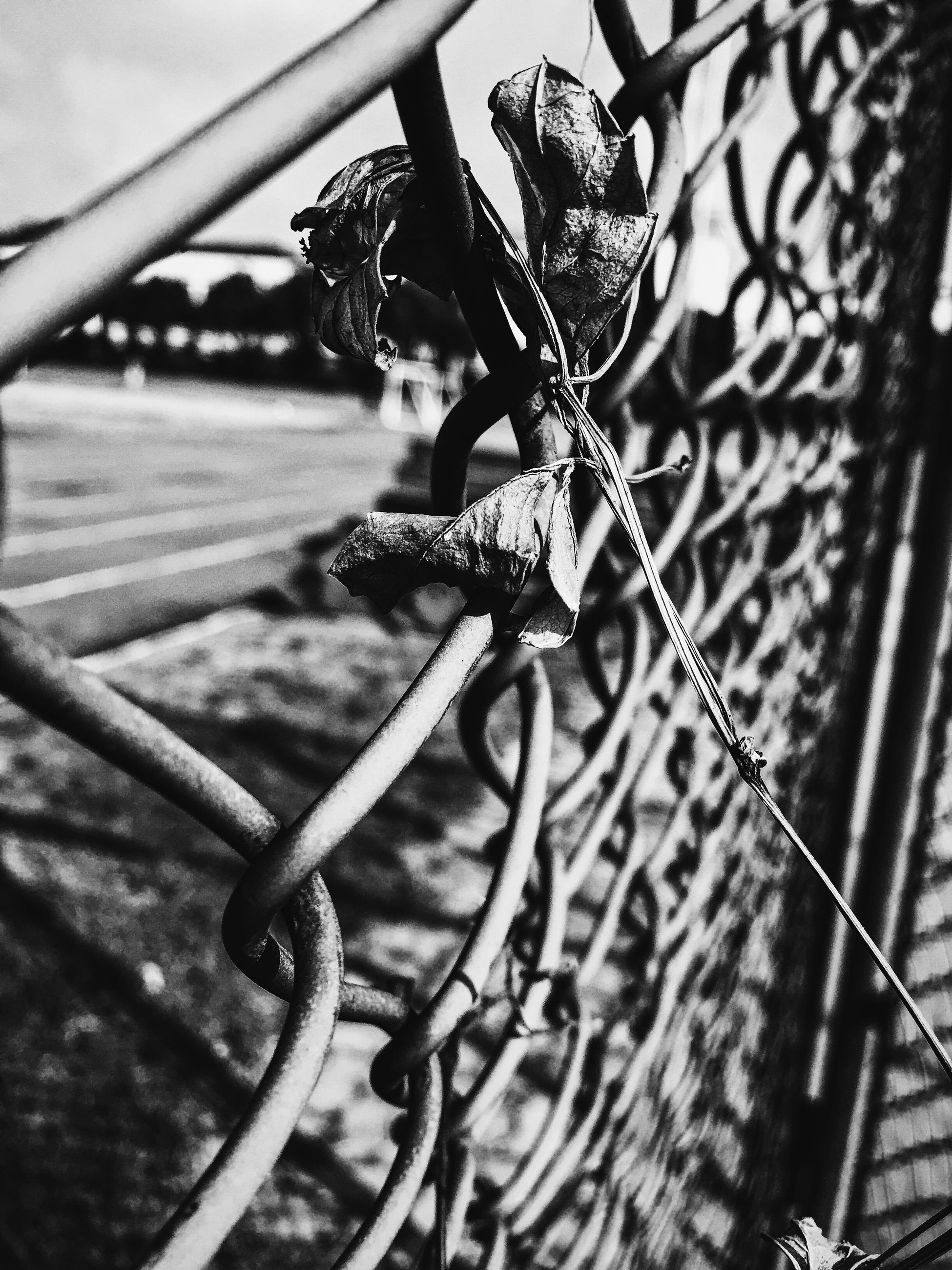 metal, chainlink fence, fence, focus on foreground, protection, close-up, railing, bicycle, metallic, safety, day, pattern, part of, sunlight, outdoors, security, no people, cropped, wheel, chain
