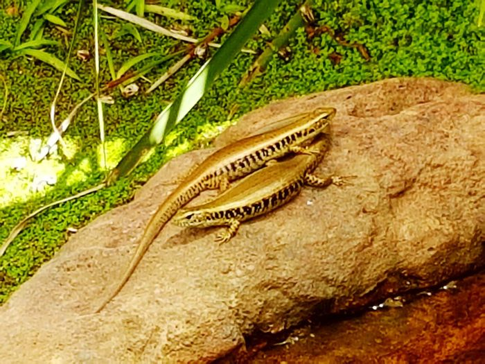 Yin & Yang Animal Wildlife Reptile Beauty In Nature