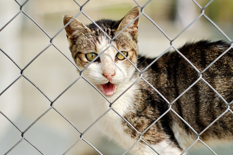 Close-up portrait of a cat seen through chainlink fence