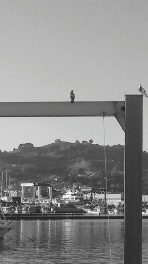Docks... Water Outdoors Harbor Day Sea From My Polnt Of View From My Point Of View Frommypointofview Awayfromeverything Getting Away From It All Wandering Around Italy🇮🇹 The Week On EyeEm EyeEm Gallery EyeEm Selects Bird Black And White B&w Blackandwhite Wandering