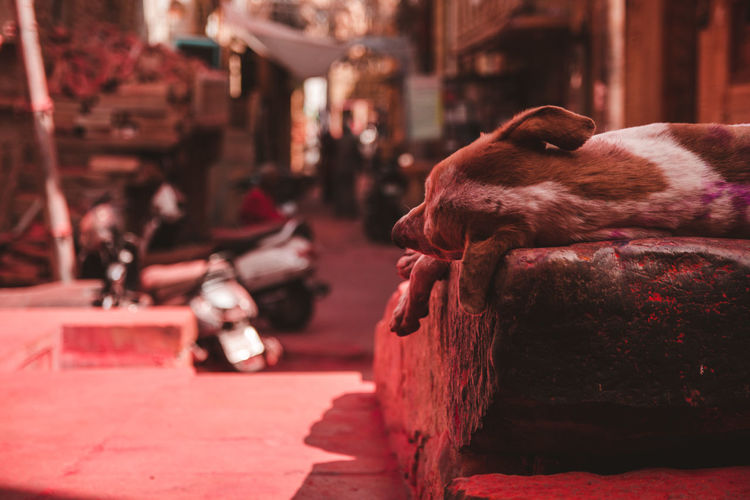 Dog sleeping in a city