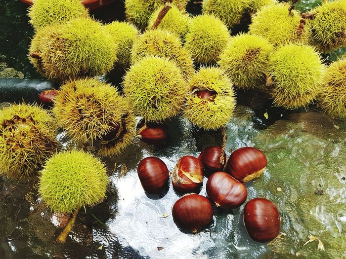 Sweet chestnuts Outside Photography Daylight Sweet Chestnut EyeEm Selects Close-up