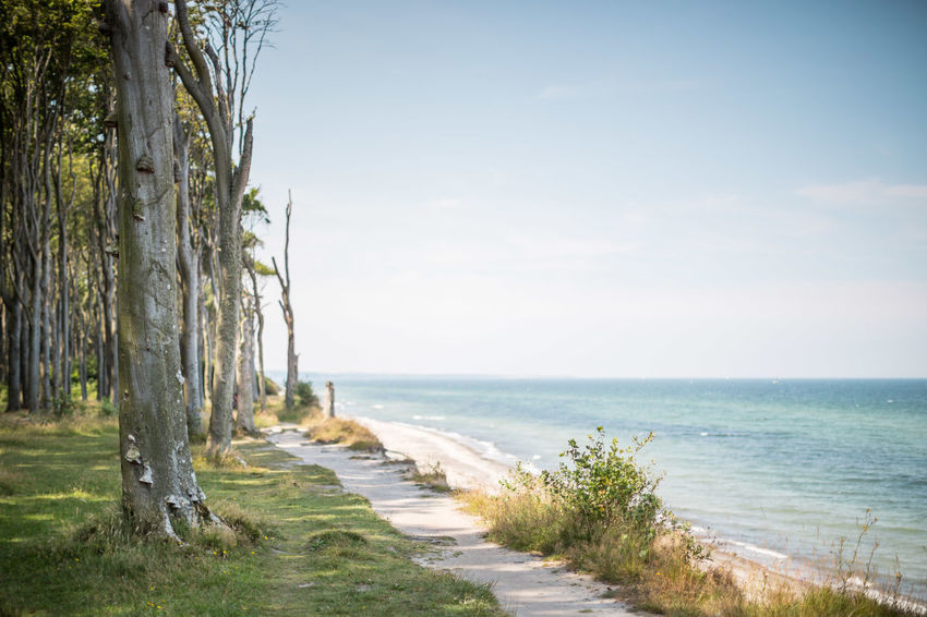 Gespensterwald Beauty In Nature Blue Calm Coastline Day Grass Growth Horizon Over Water Idyllic Nature No People Non Urban Scene Non-urban Scene Ocean Outdoors Remote Scenics Sea Shore Sky The Way Forward Tranquil Scene Tranquility Tree Water