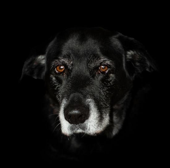 Canine Dog One