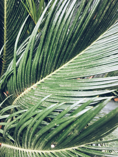 Processed with VSCO with a5 preset Leaf Green Color Palm Leaf Close-up Growth Palm Tree Natural Pattern Tree Tropical Climate Leaves