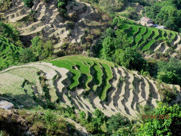 Green Color Hill Landscape Mountain Rural Scene Step Fields, Nepal, Nuwakot Nepal, Symmetry, Shades Of Green, Tranquil Scene Valley