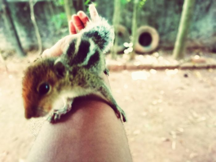 cute squirrel Human Hand Pets Dog Low Section Holding Young Animal Personal Perspective Unrecognizable Person Close-up Exotic Pets Squirrel Rabbit Bearded Dragon Bird Feeder Lizard Rodent Pet Owner Tail Chameleon Puppy Hamster Hedgehog Chipmunk Paw Cropped