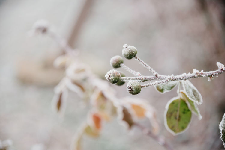 Close-up of snow on twig