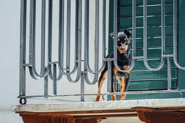 Portrait of dog by window